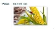 CN - 4.3 GMOs.mp4